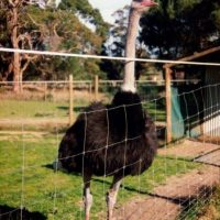 Ostrich Farm Planning Application